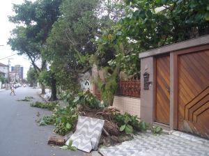 árvore caída sobre uma casa na Rua Augusto Paulino.