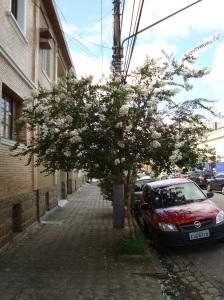 Rua Teixeira de Freitas, próximo a Rua Duque de Caxias.