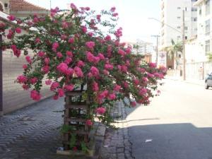 Rua Visconde de Farias,próximo a Rua Duque de Caxias.