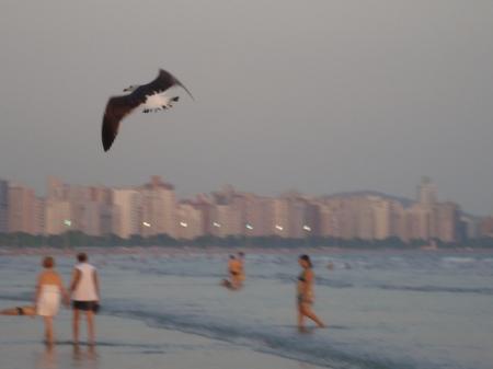 O voo das gaivotas.